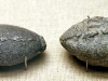 Античные свинцовые пращные пули с надписью «лови это»